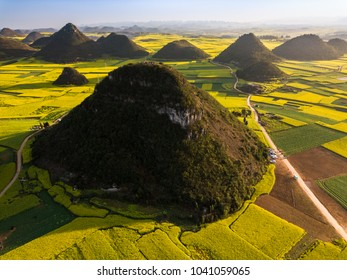 Yellow rapeseed flower field in spring, Luoping, China