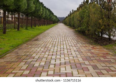 yellow and red brick road through lush green trees