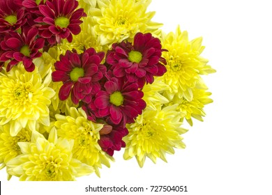 Yellow and red chrysanthemum flowers isolated on white background