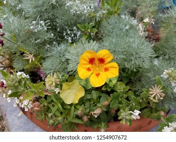 yellow and red flower and plants with green leaves