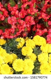 Yellow and red flowers on a sick flowerbed in nature