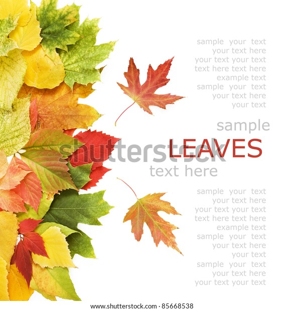 Yellow, red and green autumn leaves background with sample text