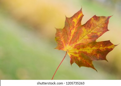 Yellow - red leaf on the yellow - green background