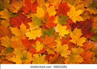 Yellow Red and Orange Autumn Leaves Background.