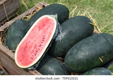 Yellow and red sweet watermelon.Thailand