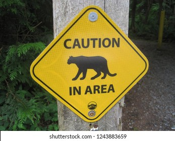 A yellow reflective sign near Port Moody is warning careless hikers at a trailhead about a cougar and the possible threat in a regional park in the Greater Vancouver Area in British Columbia Canada.
