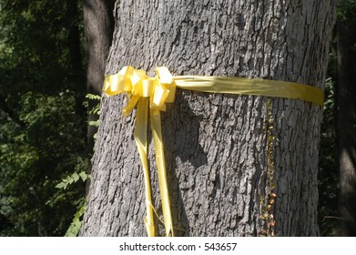 Yellow ribbon around tree in front of deployed solider's home