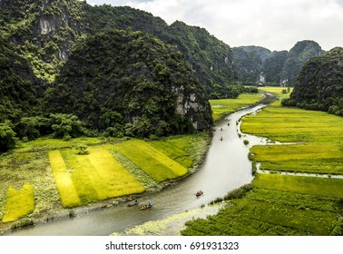 Yellow rice field on Ngo Dong river in Tam Coc Bich Dong from mountain top view in Ninh Binh province of Viet Nam