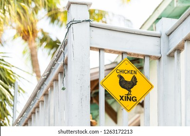 Yellow road, street, traffic caution warning sign with chicken, hen, rooster crossing, xing on balcony building, palm trees in background in Key West Florida city island, urban keys