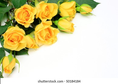 Yellow roses images stock photos vectors shutterstock yellow rose mightylinksfo