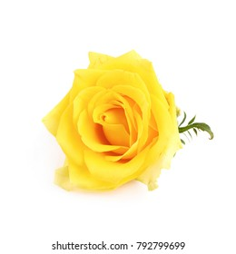 Yellow rose bud isolated over the white background