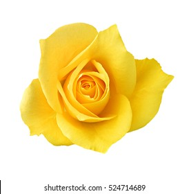 yellow rose button for your designs