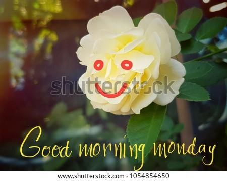 Yellow Rose Flower Smile Good Morning Stock Photo Edit Now