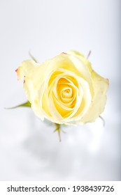 Yellow rose in a glass vase on a white background. Selective focus. Top view.
