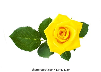 yellow rose isolated on a white background