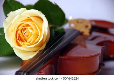 yellow rose and violin