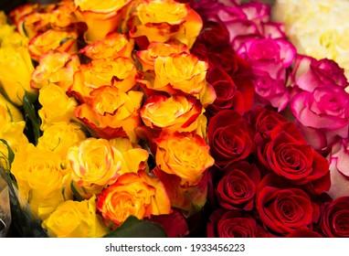 Gelber und rosafarbener Hintergrund. Frische Hunde