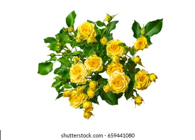 Yellow roses bouquet isolated on white background. Greeting card