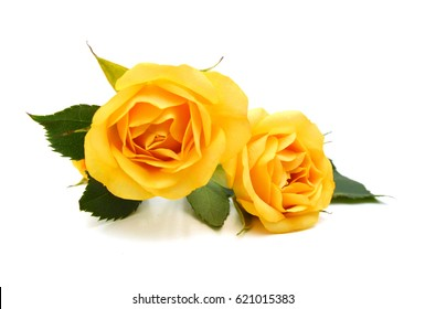 Yellow roses bunch isolated on white background.