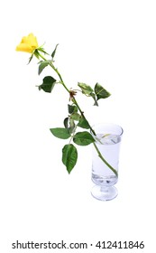 Yellow roses in a glass of water isolated on white background