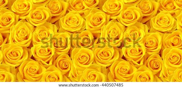 Yellow roses horizontal seamless pattern.