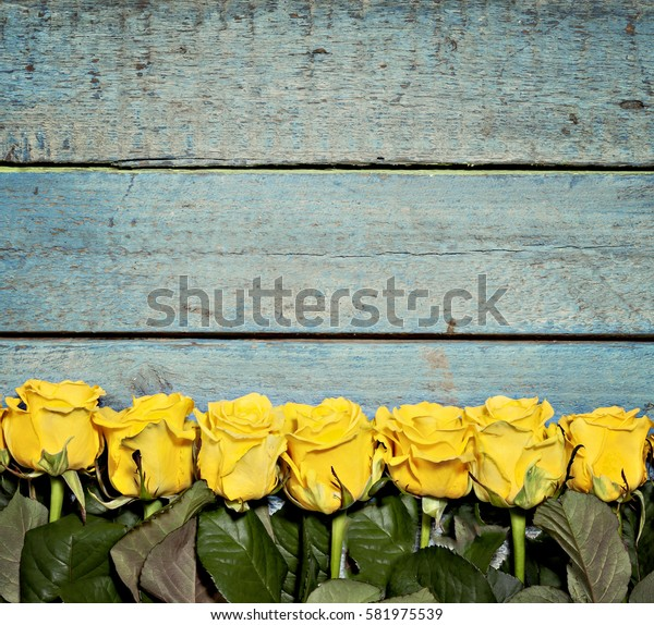 lot of yellow roses on a blue wooden background.