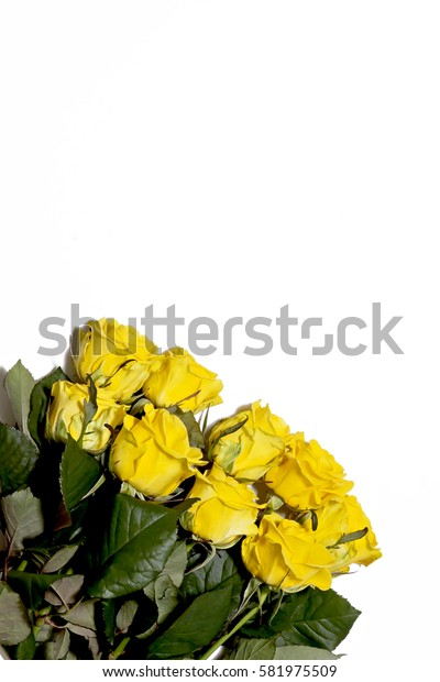 lot of yellow roses on a white background.