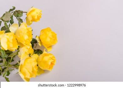 Yellow roses on white grey background