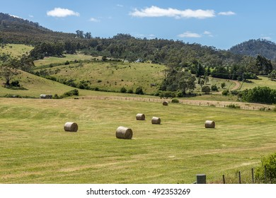 yellow round bales of hay spread in cultivated fields countryside