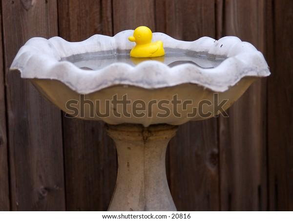 A yellow rubber duck in a garden birdbath.