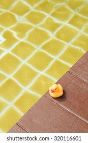 Yellow rubber duck in a pool.
