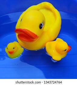 yellow rubber ducks on blue backgroud.