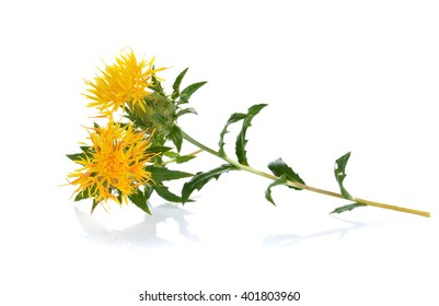 Yellow Safflower isolated on white background