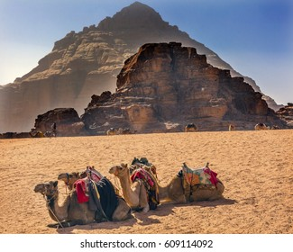 Yellow Sand Dune Camel Wadi Rum Valley of the Moon Jordan.  Inhabited by humans since prehistoric times, place where TE Lawrence of Arabia in the early 1900s