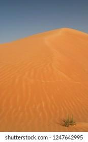 yellow sand dunes against blue sky in Oman desert