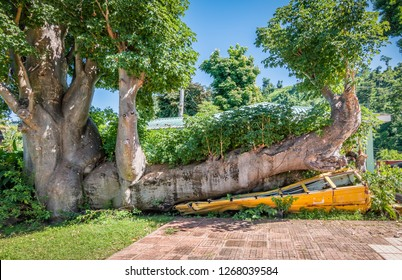 Yellow school bus under giant fallen  tree due to a hurricane on Dominica island, West Indies.