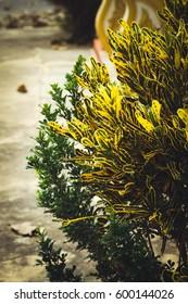 Yellow small tree