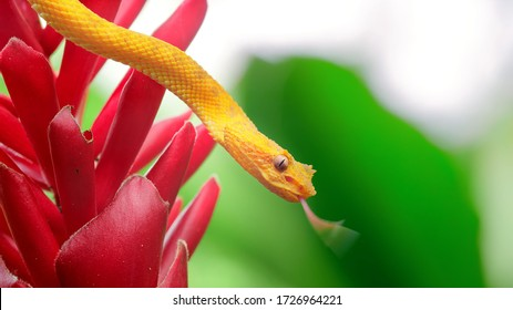 The yellow snake went hunting