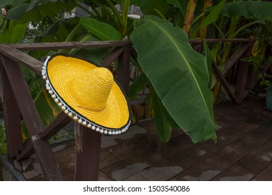 yellow sombrero on a background of palm trees