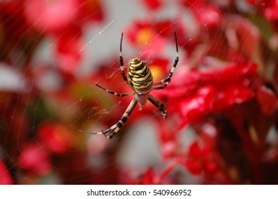 Yellow Spider in a red flower background