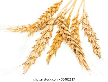 Yellow spikelets wheat on white background