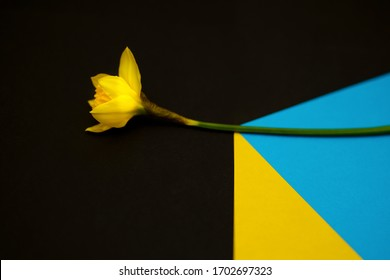 Yellow spring flower with geometric motif