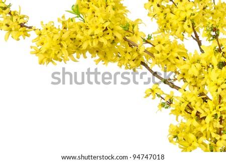 Yellow Spring Flowers Border White Background Stockfoto Jetzt