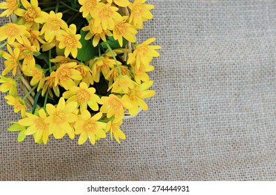 yellow spring flowers sunlit burlap background