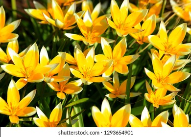 yellow spring flowers in Sunny weather - Shutterstock ID 1293654901