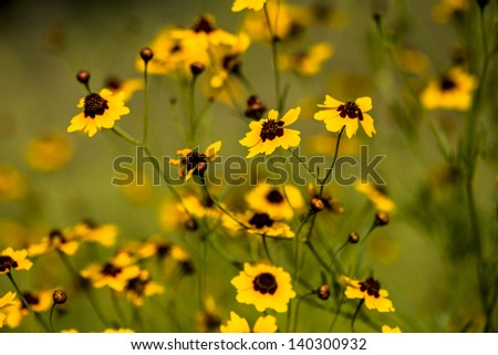 Yellow Spring Flowers Texas Stock Photo Edit Now 140300932