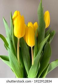 Tulpenbouquet einzeln auf grauem Hintergrund, floraler Frühlinghintergrund mit gelben Tulpen