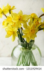 Yellow spring narcissus, daffodil