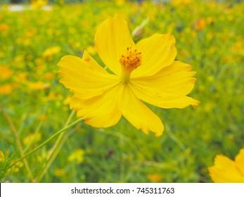Four petal flowers images stock photos vectors shutterstock yellow star yellow flower and up yourself along the way germinated seeds are fast mightylinksfo