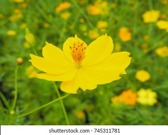 Chaiyaporn pakdee tongs portfolio on shutterstock yellow star yellow flower and up yourself along the way germinated seeds are fast mightylinksfo